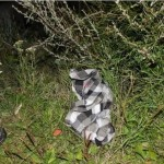 Politsei leidis Tartumaal metsa eksinud mehe surnuna